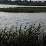 Voyage à la réserve naturelle delta barcelone