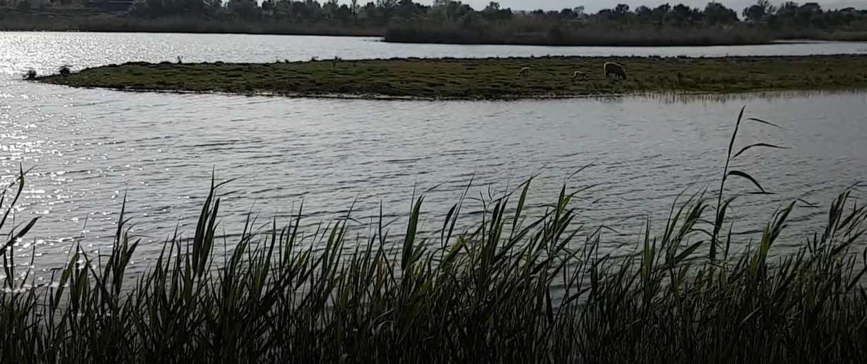 réserve naturelle delta barcelone