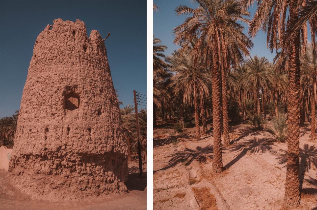 Découverte d'une oasis de verdure en plein désert
