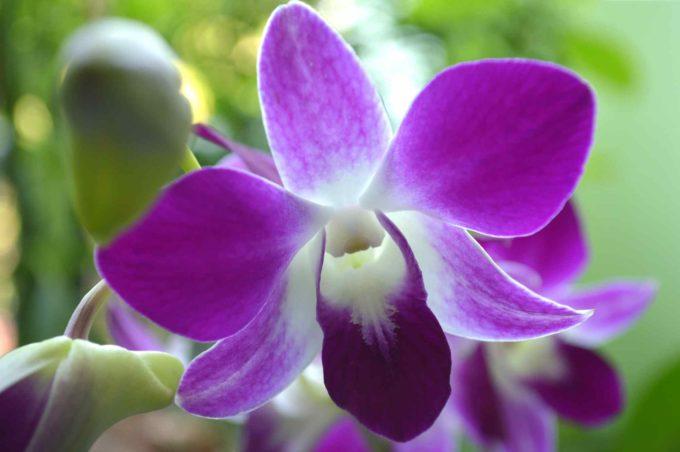 Marché aux orchidées en Thaïlande