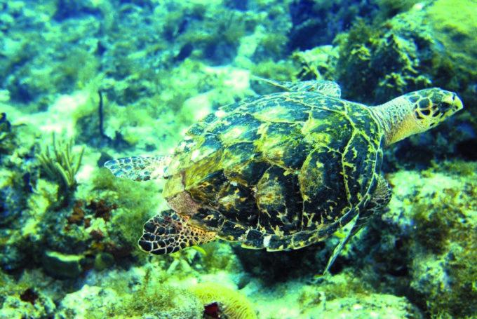 Dans les profondeurs des eaux turquoises des Bahamas CP= @Michel-Hasson