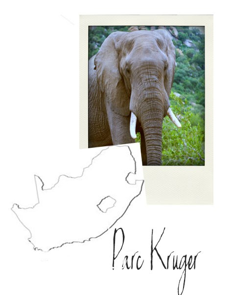 afrique du sud Polaroid