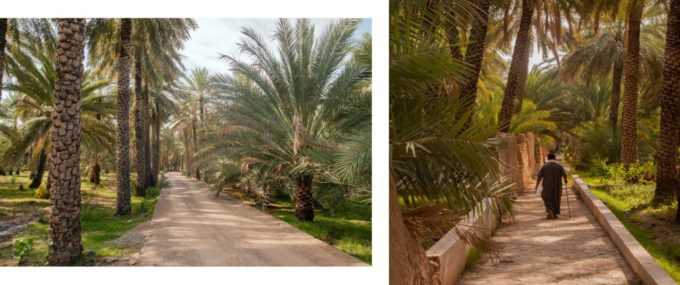 Dans la palmeraie de Nizwa, au calme