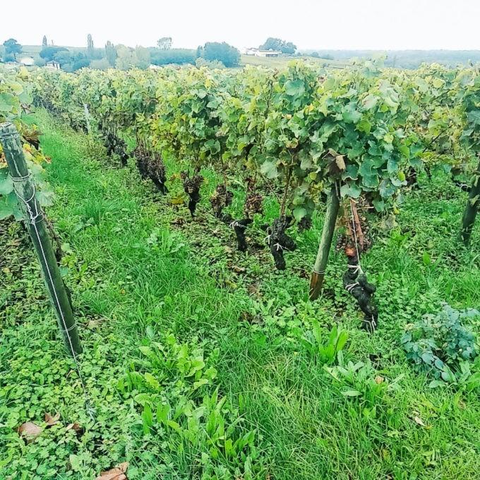 Découvrir la route des vins