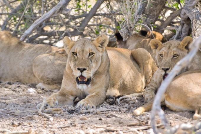Le parc d'Etosha pour un safari grandeur réelle