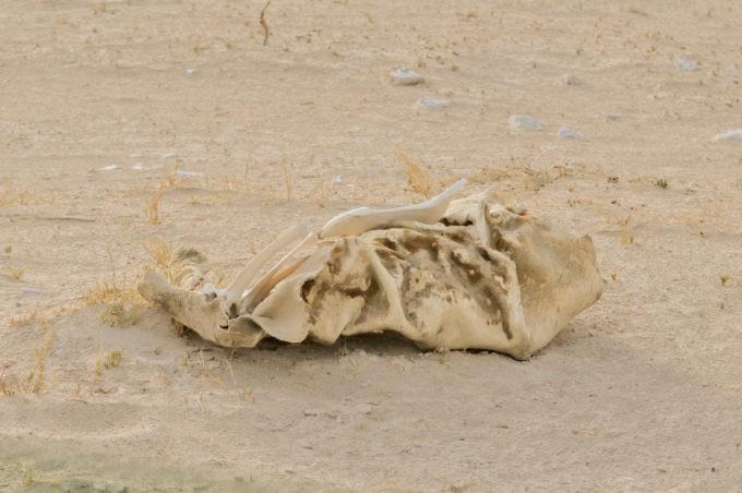 Un bout de squelette