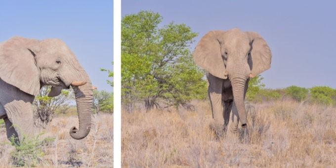 Éléphants dans le parc national d'Etosha