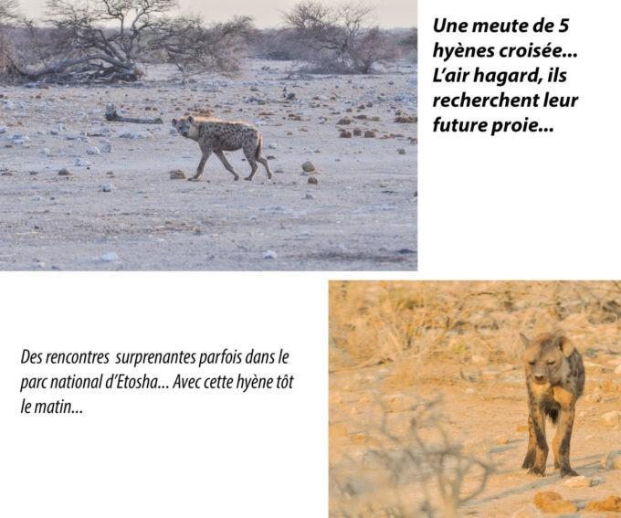 Des hyènes