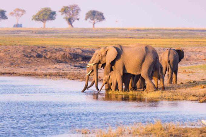 Un troupeau d'éléphants en Namibie