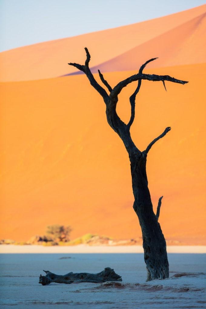 Les arbres fossilisés du désert du Namib