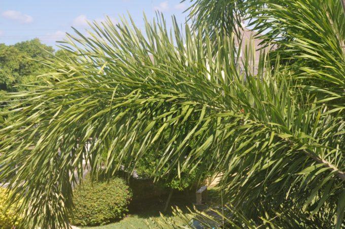 Végétation épaisse