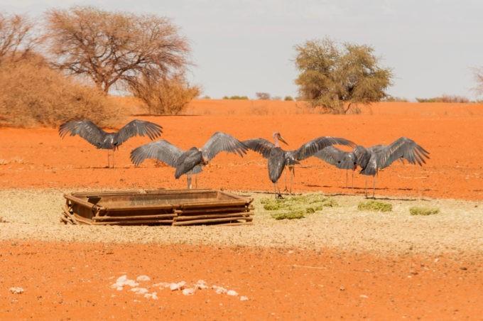 Des oiseaux dans un point d'eau