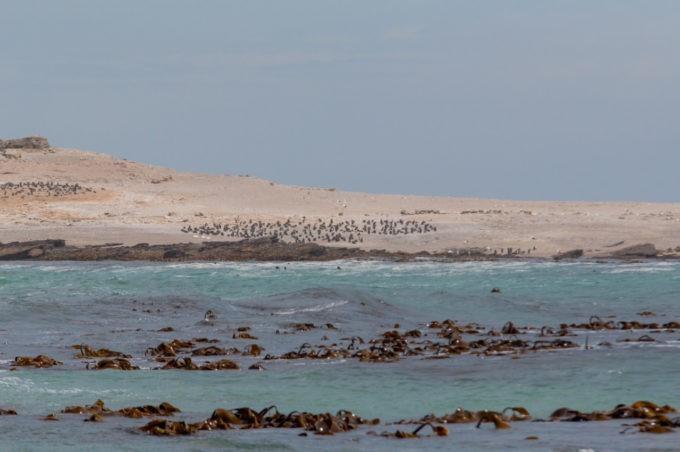 Une colonie de phoques habitent les lieux près de Luderitz
