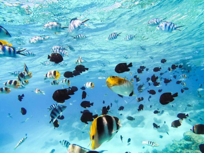 Plongée sous marine pour découvrir la faune locale