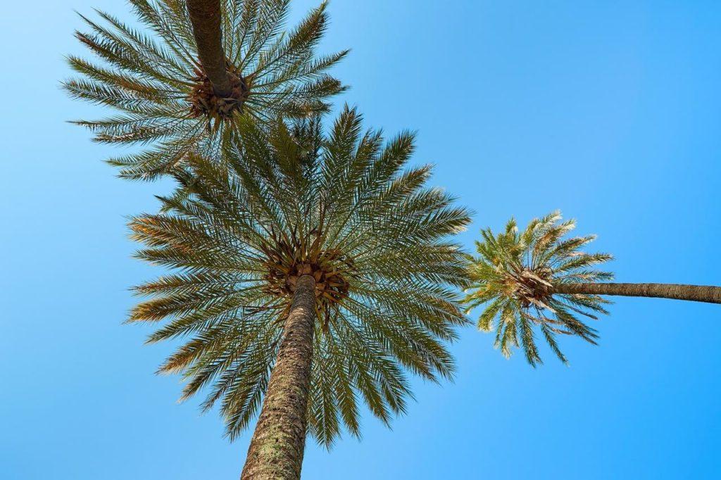 Palmiers dans le ciel