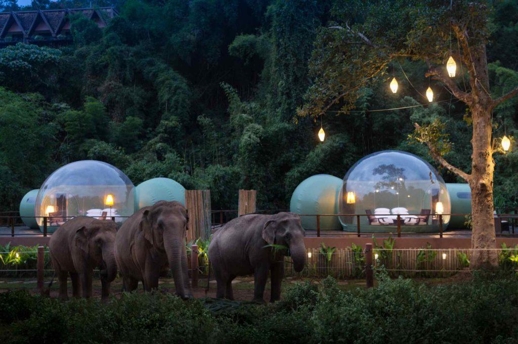 Bulles anantara éléphants