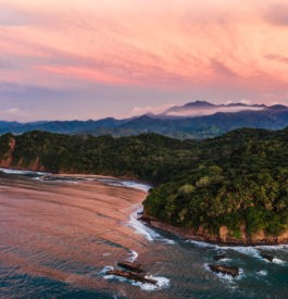 one-only-mandarina