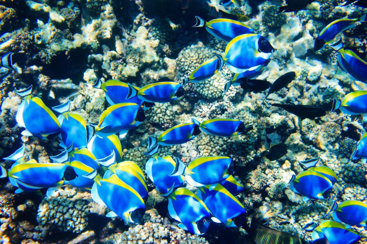 Des coraux aux Seychelles