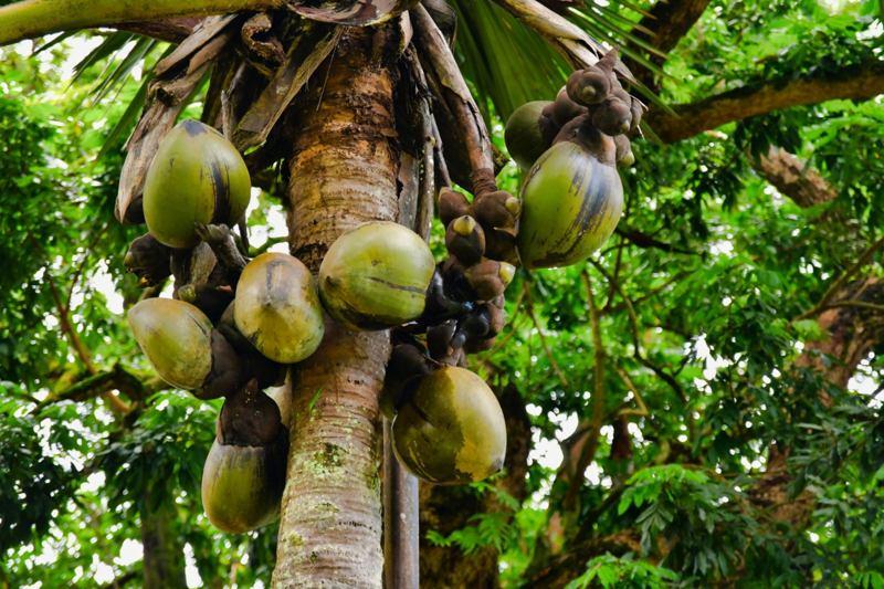 lile-aux-cocos-seychelles