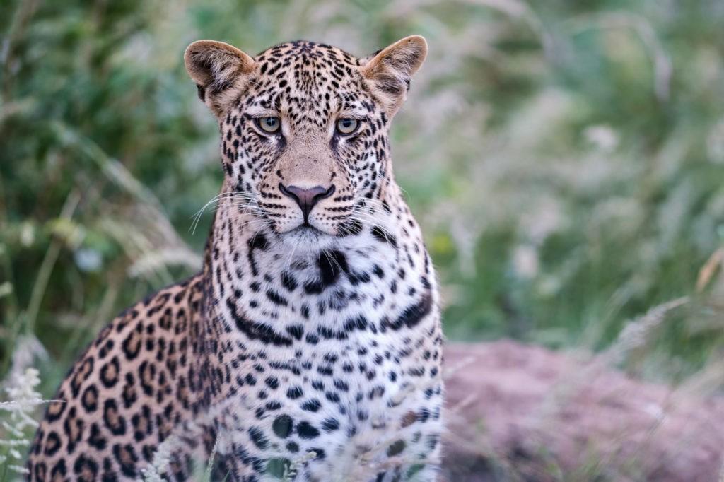 Toute la journée, vous croisez des animaux sauvages, le luxe total !