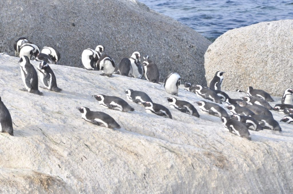 Les pingouins se prélassent au soleil