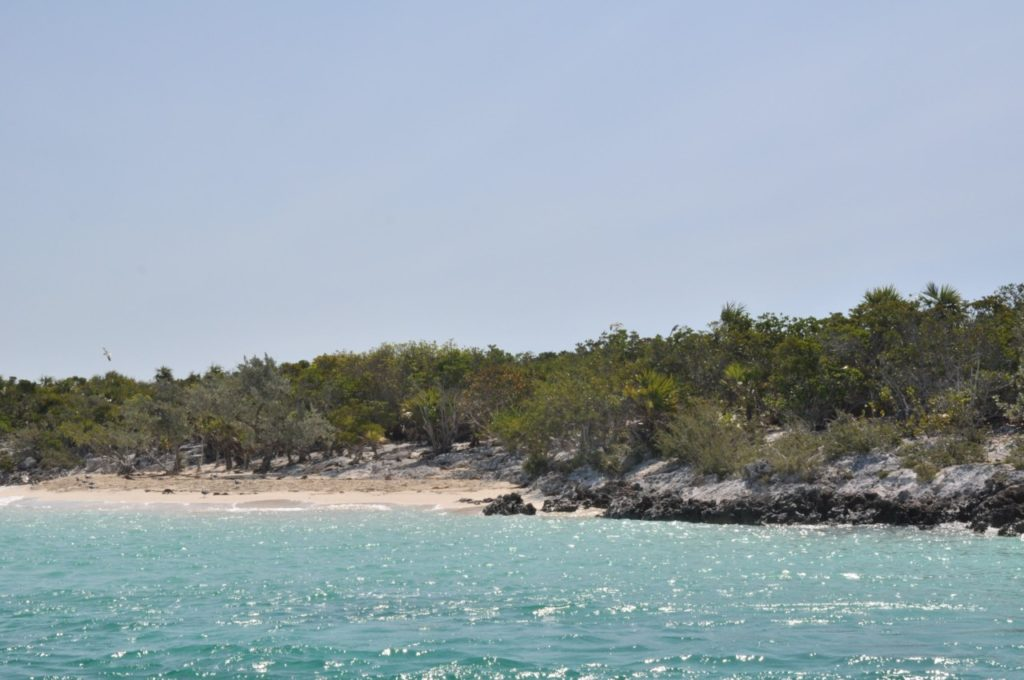Découvrir Iguana Island