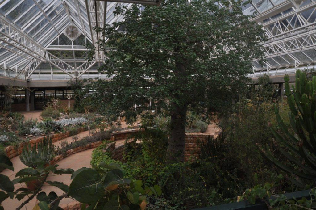 A notre retour, nous décidons de rejoindre le Parc Kirstenboch Garden