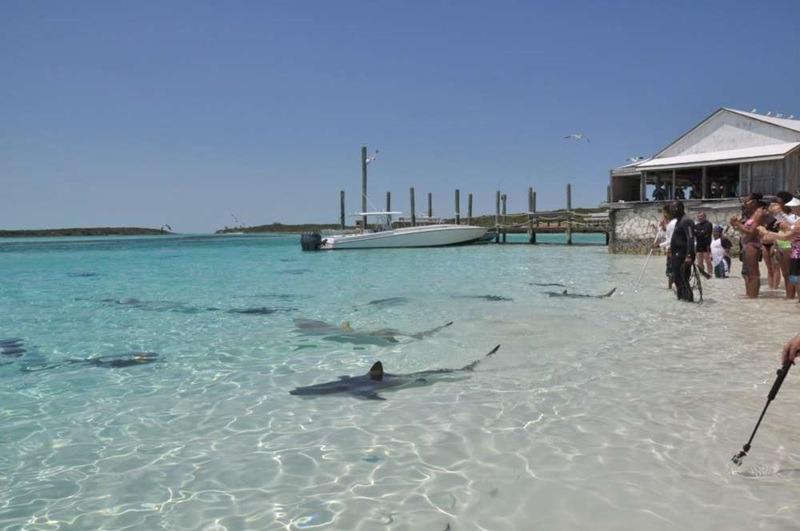 Les requins de Paradise Island