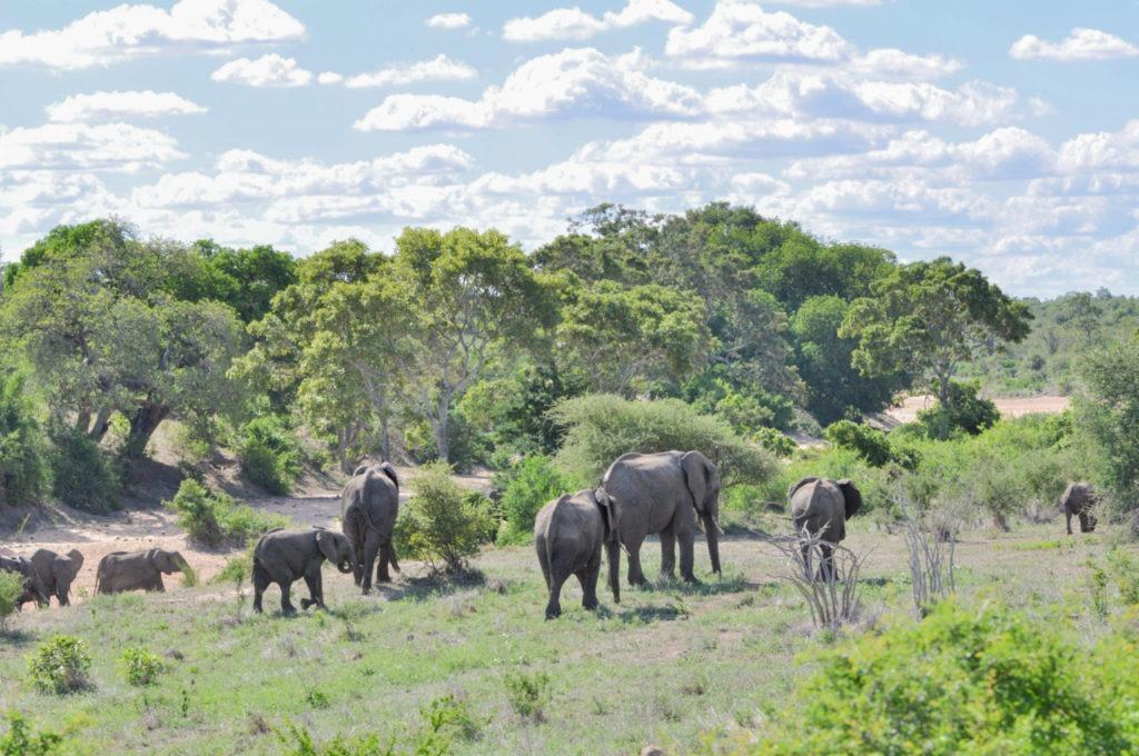Un troupeau d'éléphants