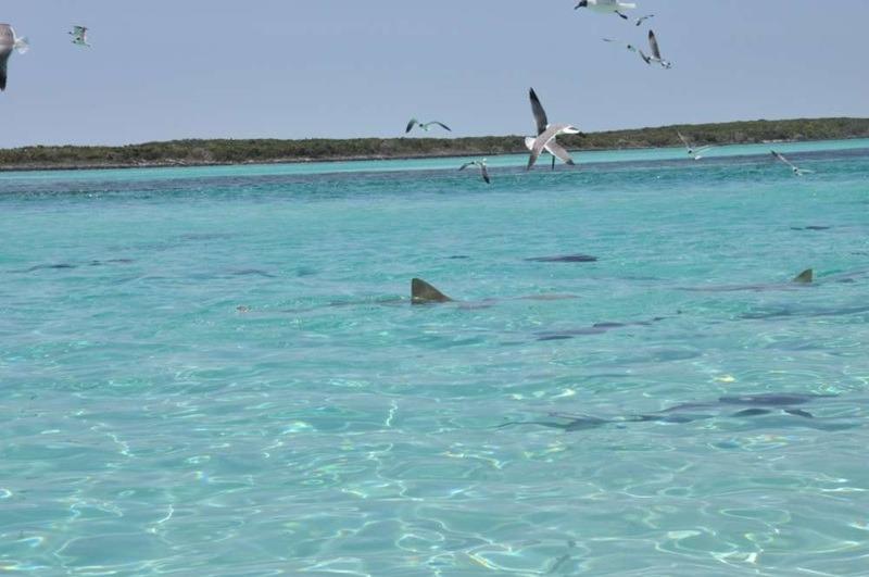 Voir des requins