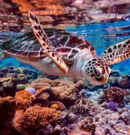Top 10 des destinations pour nager avec la vie marine