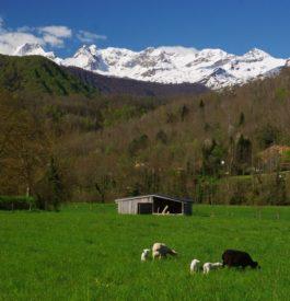 Roadtrip en Ariège, terre sauvage protégée CP : Pierre Goujot