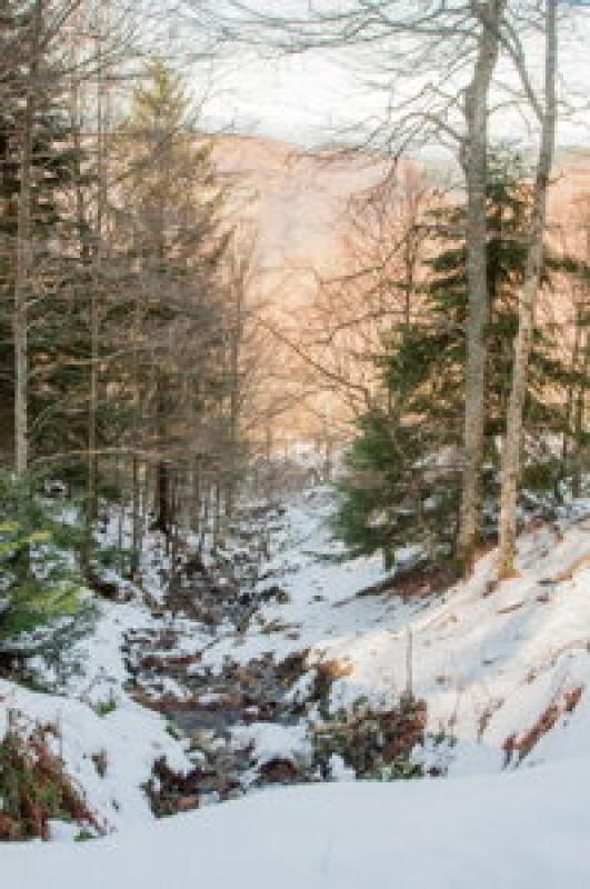 Ruisseau - chemin de neige