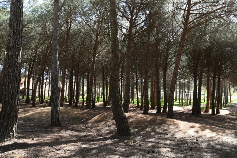Forêt - Portiragnes