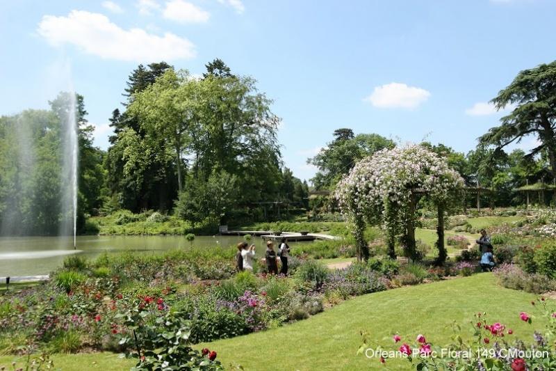 Orléans - parc floral de roses