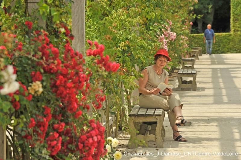 Profiter du parfum - roses