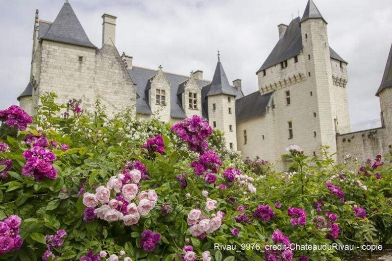 Le château de Rivau - son jardin de roses