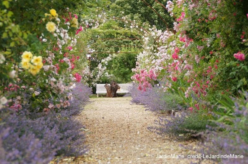 Le jardin de Marie - roses