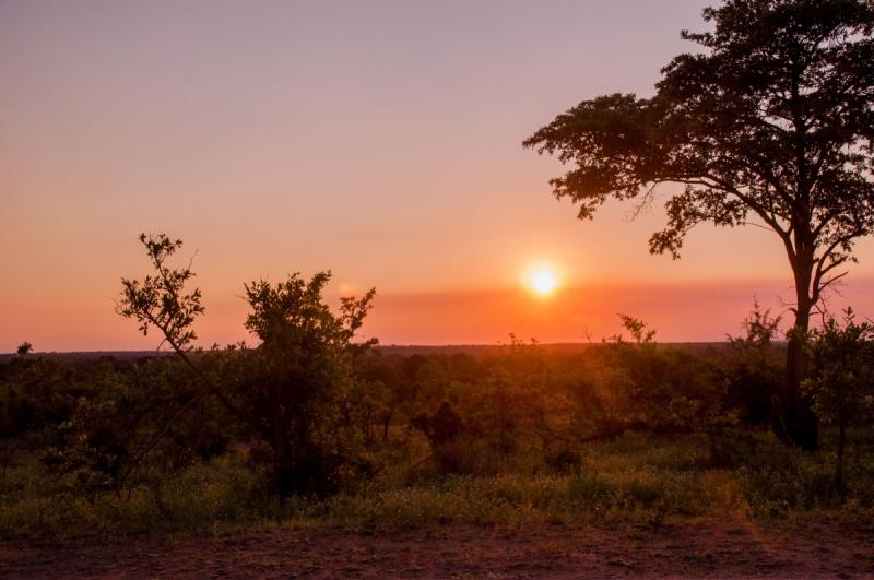 Dans la savane - Parc Kruger - Afrique du Sud