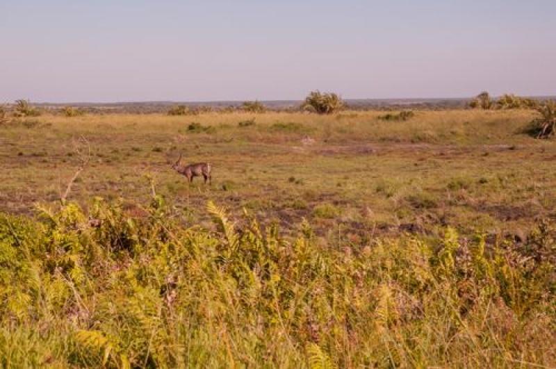 Les animaux sauvages - parc de Ste Lucia - Afrique du Sud