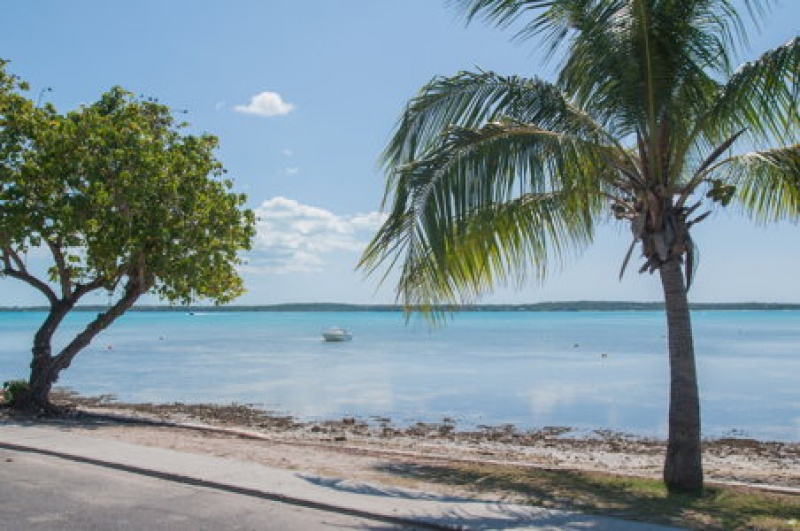 Cocotiers - palmiers - Harbour Island - voyage Bahamas