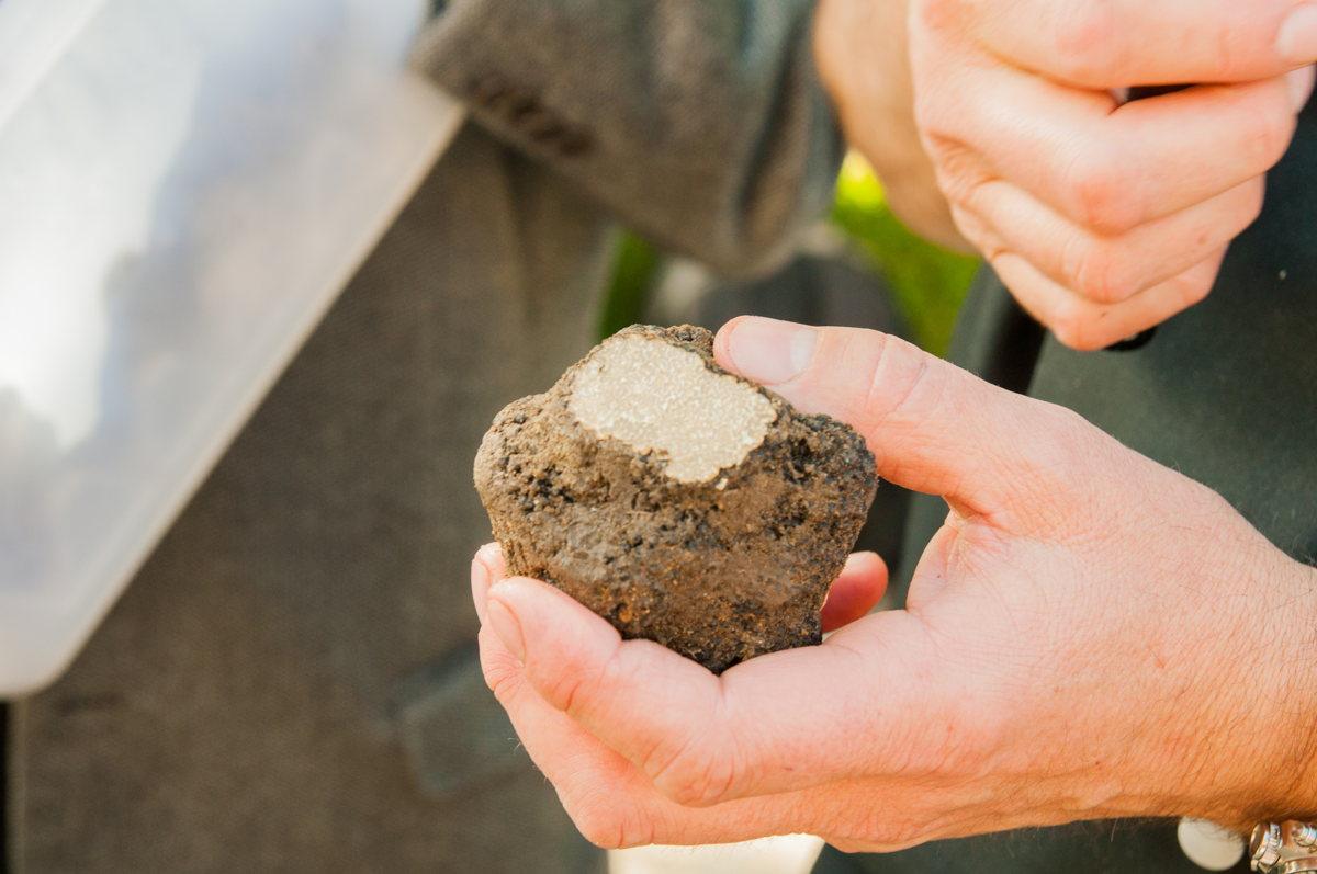 Ménerbes, capitale de la truffe noire dans le Vaucluse