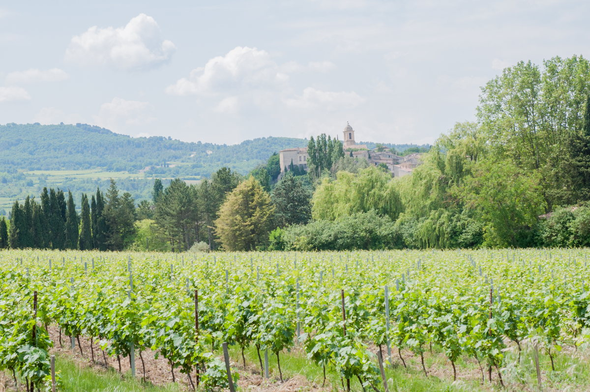 Paysages de rêve au cœur des vignes en Vaucluse