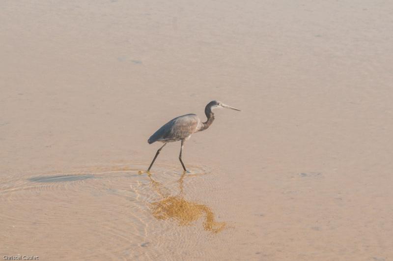 Un oiseau rare dans la réserve de Bandia au Sénégal