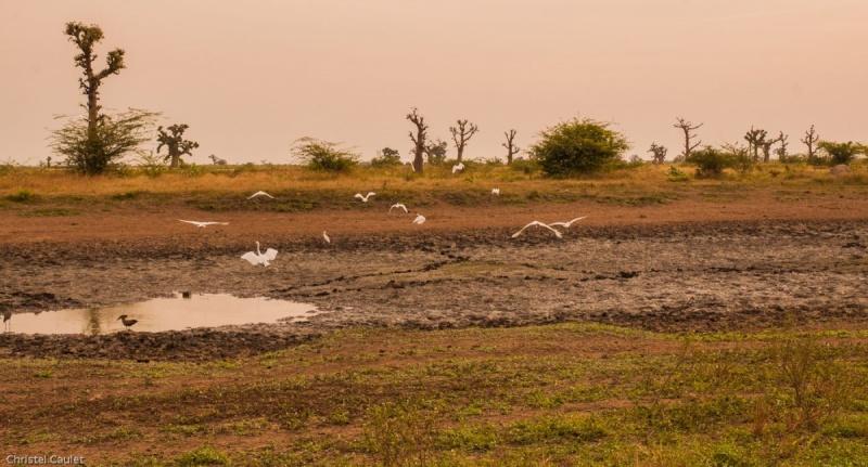 Dans la réserve de Bandia au Sénégal