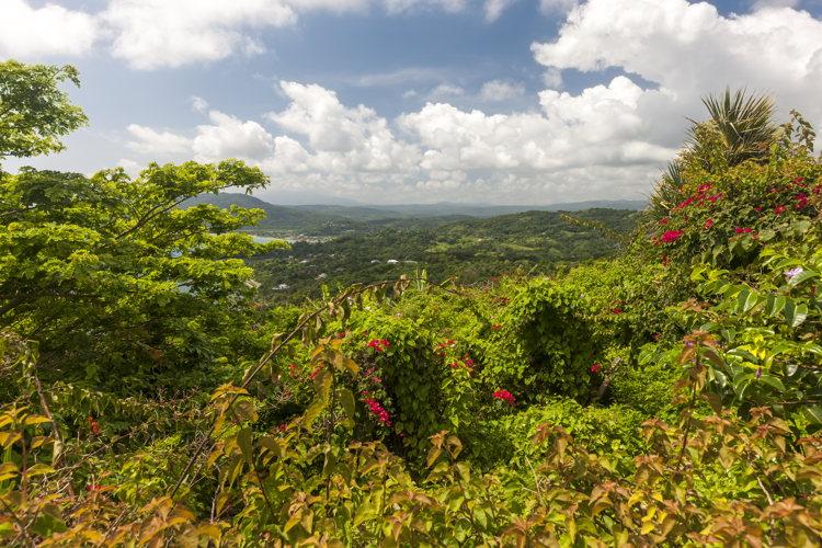 Escale en Jamaïque - admirer la nature - Croisière avec Crystal Cruises