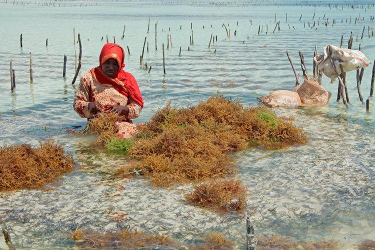 Voyage à Zanzibar -Stone Town - femmes travail
