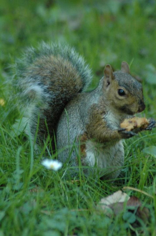 Dans Dublin, un écureuil