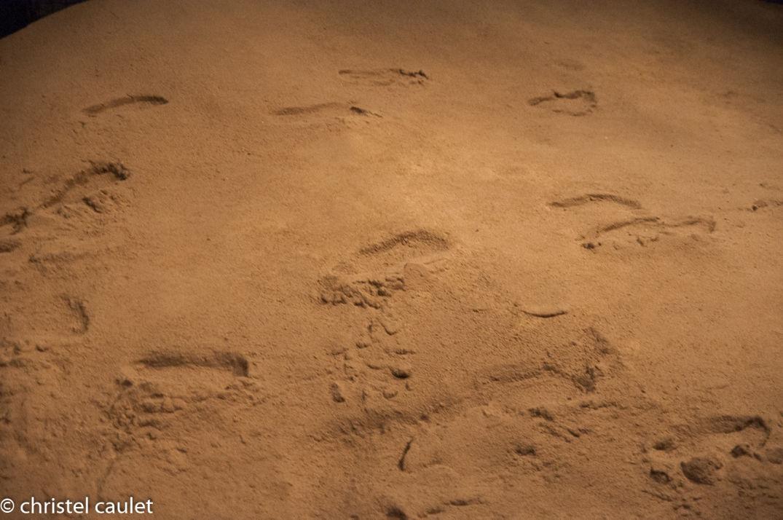 Une reproduction des premières traces humaines au Parc de la Préhistoire