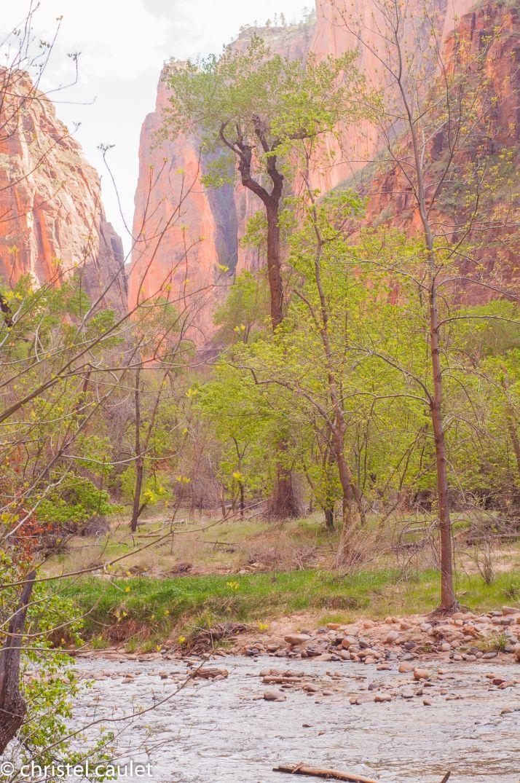 Dense végétation au milieu du désert - zion canyon - road-trip USA